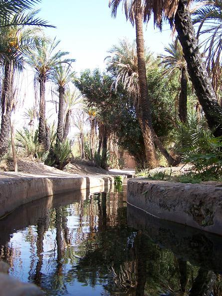oasis-riadh-tiout.JPG